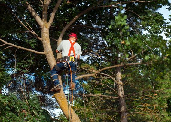tree-arborist