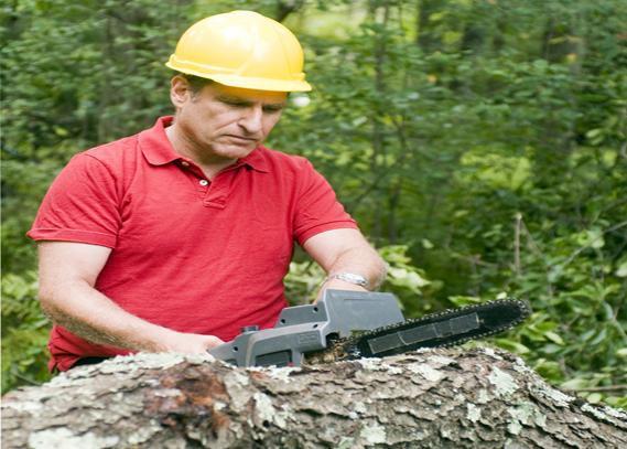 arborist-tree-removal