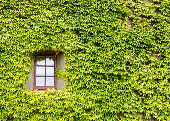 green-wall-architecture