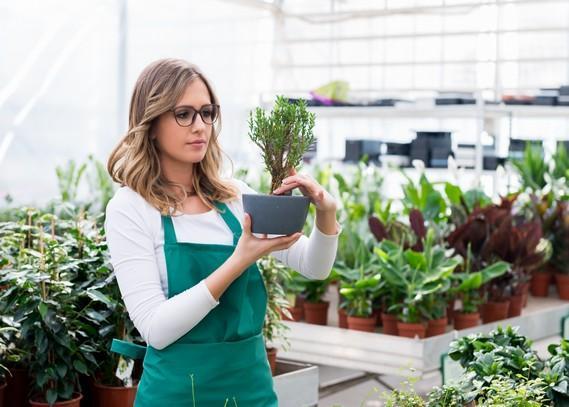 indoor-planting