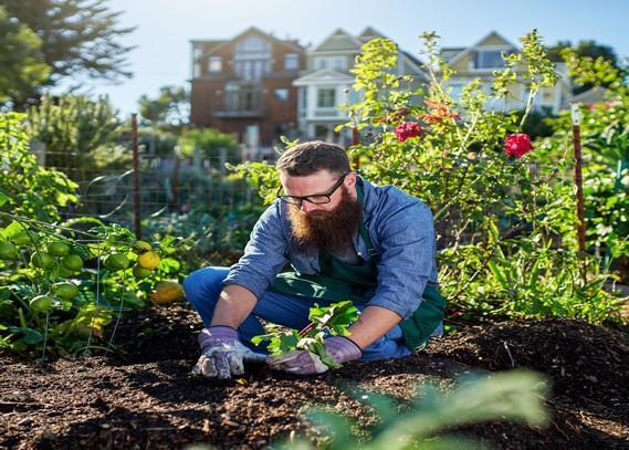 organic-gardening-consultant