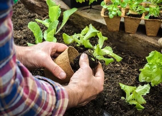 organic-gardening-services
