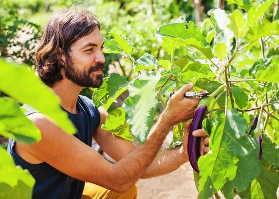 permaculture-landscaping