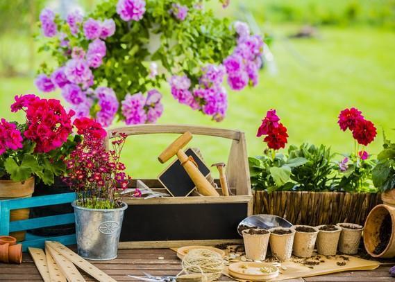 indoor-plants-supply